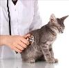 Ветеринарные клиники в Гае